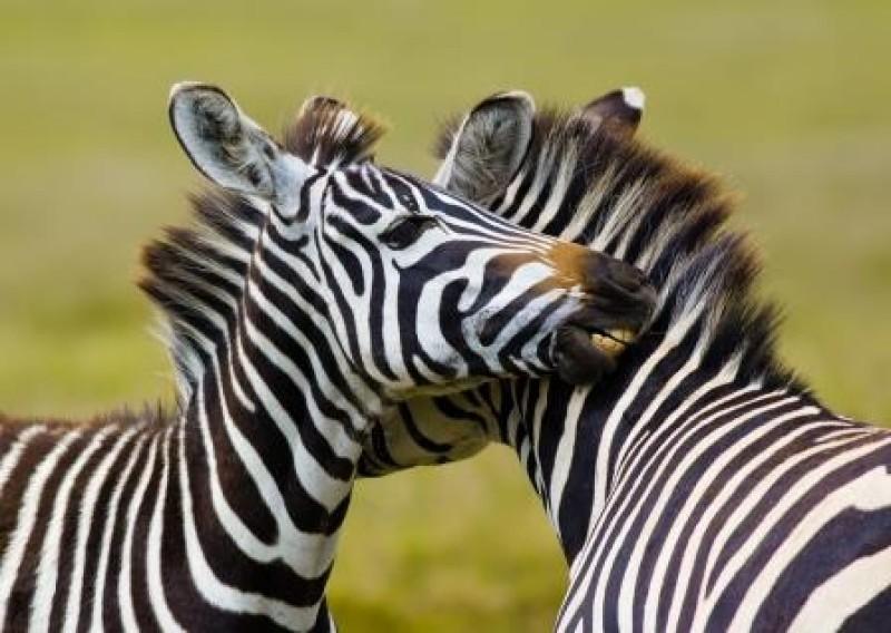 Safariture til spændende destinationer i Afrika